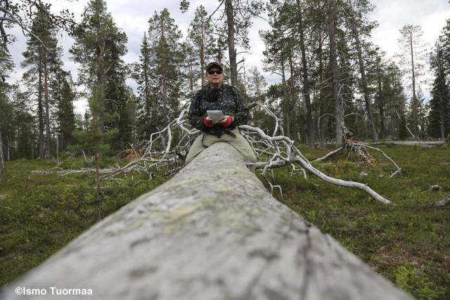 Koilliskaira - kuva © Ismo Tuormaa